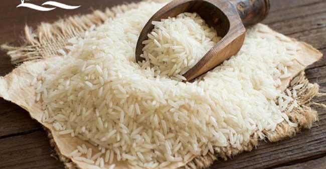 برنج-شیرودی-2