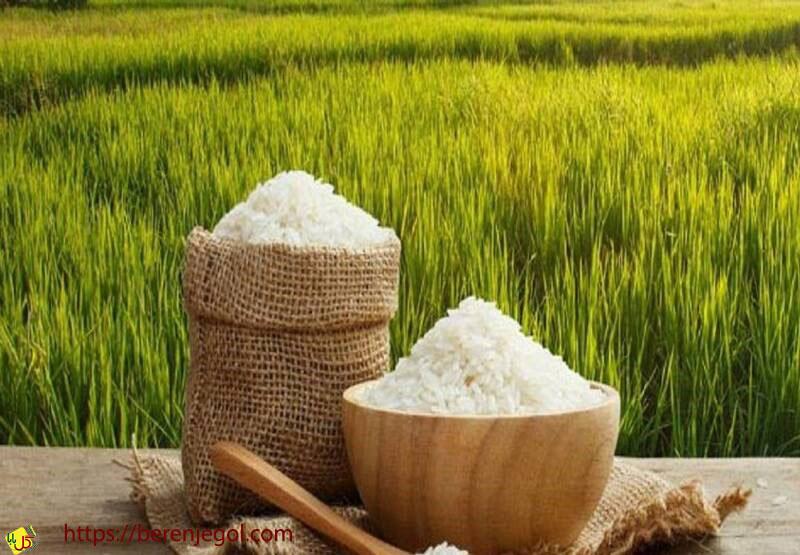 بهترین-برنج-ایرانی