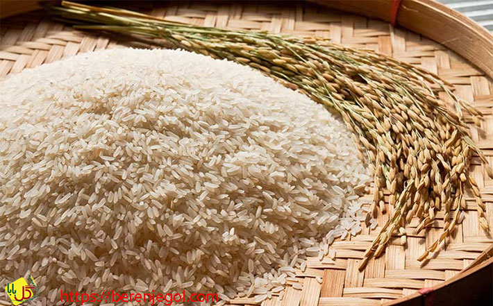 معرفی-انواع-برنج-ایرانی-1