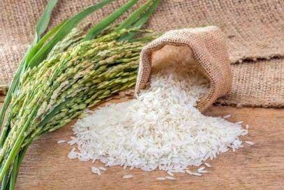 برنج-فریدونکنار-2
