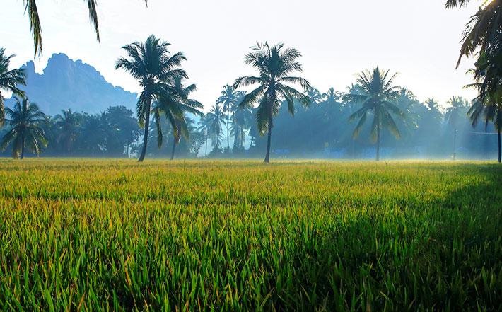 خرید-اینترنتی-برنج