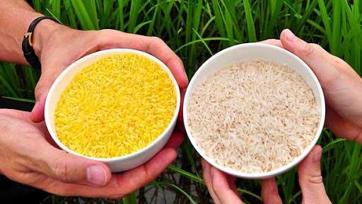 اصلاح-ژنتیکی-برنج-1