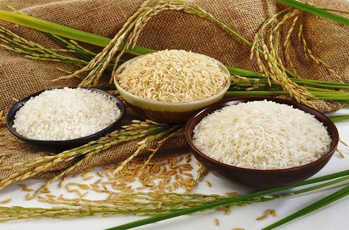 اصلاح-ژنتیکی-برنج-20