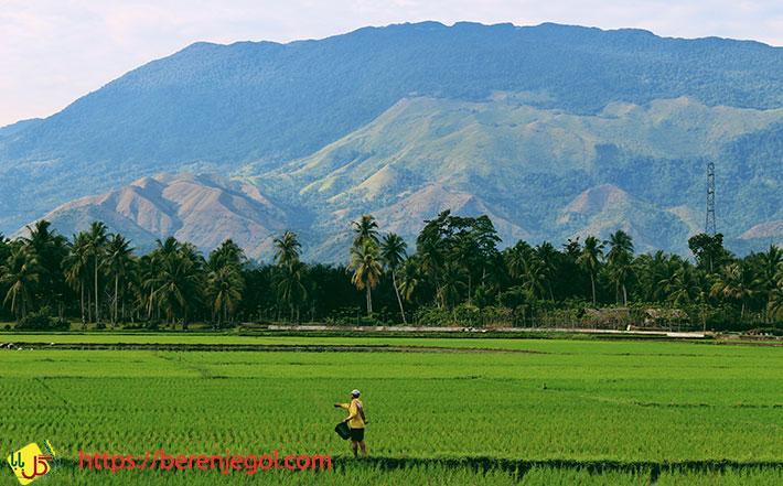 تشخیص-برنج-ارگانیک
