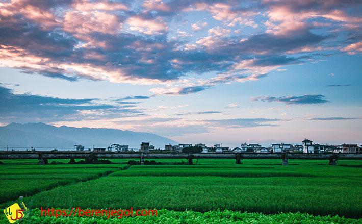 آشنایی-با-برنج-شمال