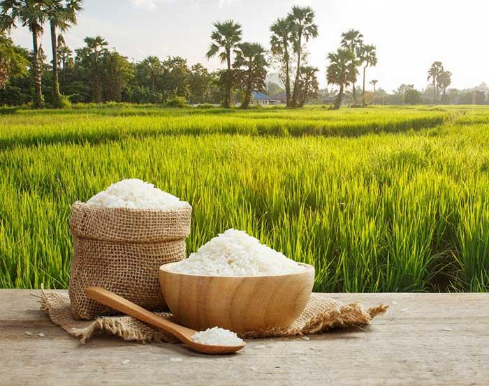 خرید-برنج-ایرانی-11