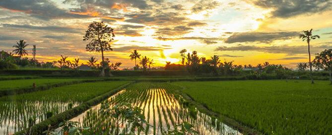 قوانین-خرید-اینترنتی-برنج