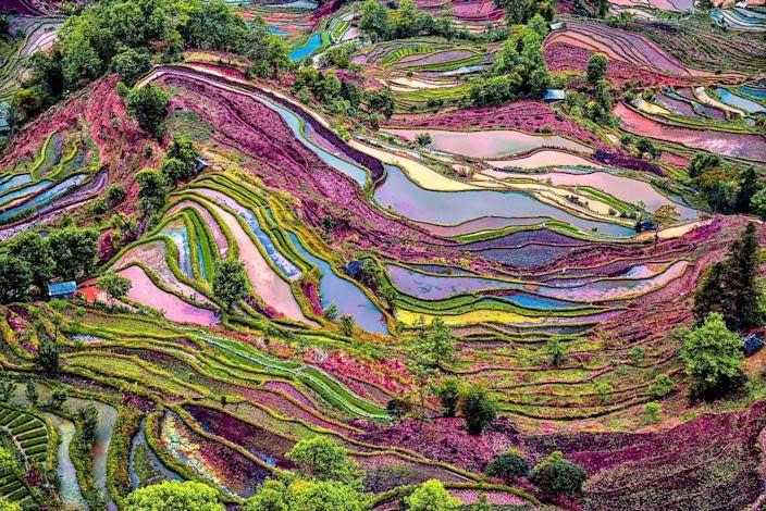 برنج-رنگی-11