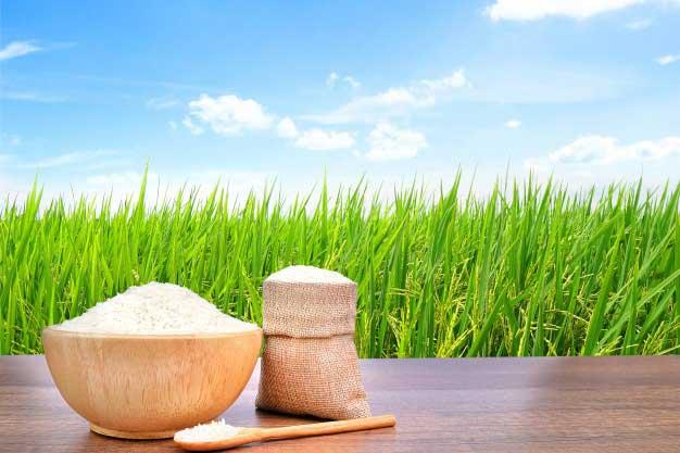 برنج-طارم-شمال-11