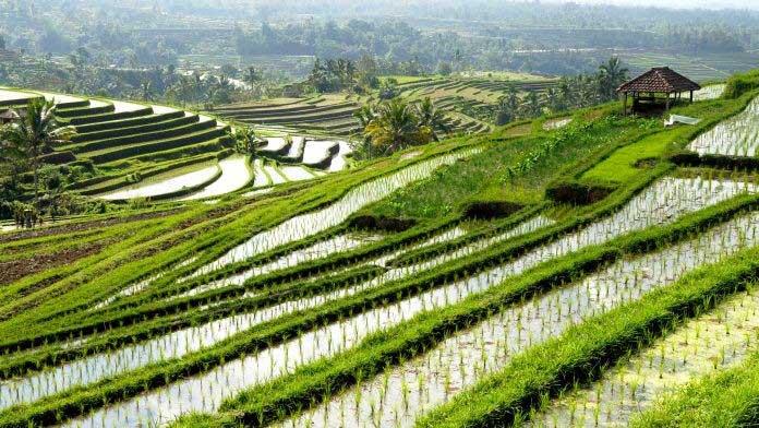 خرید-انواع-برنج-طارم-با-قیمتی-عالی-از-فروشگاه-برنج-گل-بابا