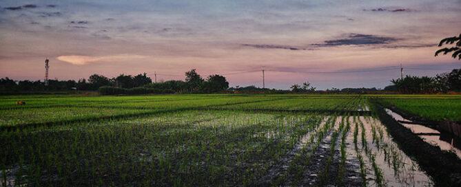 عوامل-موثر-بر-قیمت-برنج