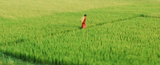 نکاتی-درباره-فروش-عمده-برنج