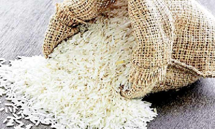 معرفی-برنج-شیرودی-1